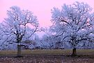 Pastel Winter Sunset by NatureGreeting Cards ©ccwri