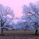 Pastel Winter Sunset by NatureGreeting Cards ©ccwri