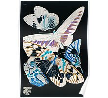 Emile Allain Séguy or Seguy Papillons Butterflies 1925 025 Inverted Poster