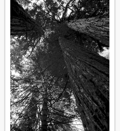 Yosemite To the Sky Plate 2 Sticker