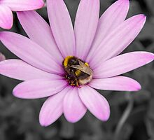 Flower bee by Sebastien Coell