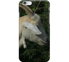 White Goat Chewing Leaves iPhone Case/Skin