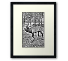 Calling For His Mate Framed Print