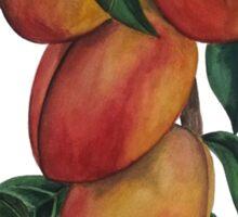 Nectarines Sticker