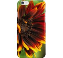 A Sunflower Set ( 3 ) Showing the Fullness iPhone Case/Skin