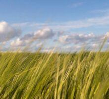Grass sky Sticker