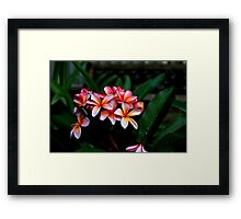 It's Jungle Out There Framed Print