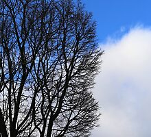 Winter Tree and Clouds 2 by marybedy