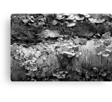 Fallen Birch with Fungi 3 BW Canvas Print