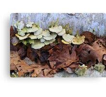 Fallen Birch with Green Fungi 4 Canvas Print