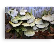 Fallen Birch with Green Fungi Canvas Print