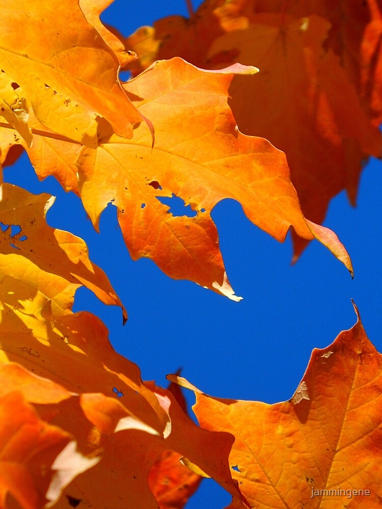 Leaves of fall....Cornucopia by jammingene