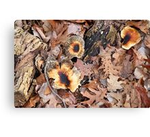 Forest Fungi Canvas Print