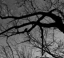 Graceful Winter Tree BW by marybedy