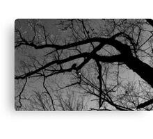 Graceful Winter Tree BW Canvas Print
