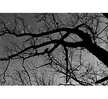 Graceful Winter Tree BW Photographic Print