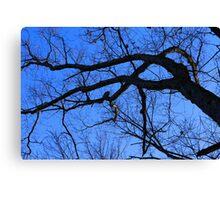 Graceful Winter Tree Canvas Print
