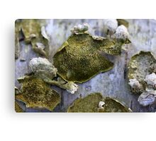 Green Fungi Canvas Print
