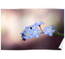 Forget-Me-Nots In The Spotlight Poster