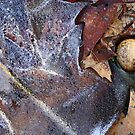 Hiking Trail Ice with Leaves and Mushroom by marybedy