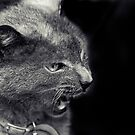 Wild Cat by Josie Eldred