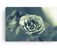 Red Rose in Grey Canvas Print