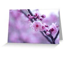 Cherry Blossom Days Greeting Card
