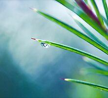 Blue Mist by Josie Eldred
