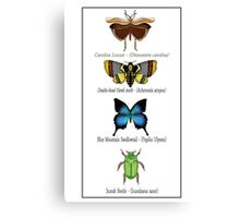 Insect Taxidermy Canvas Print