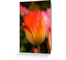 Fire Flower 2 Greeting Card