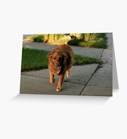 See Copper Run Greeting Card