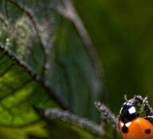 Ladybug on sunflower leaf Sticker