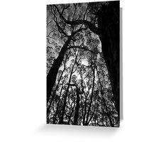 Scary Trees- Lobethal Bushland Park South Greeting Card