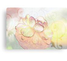 Glowing Ranuncula Canvas Print