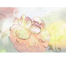 Glowing Ranuncula Photographic Print