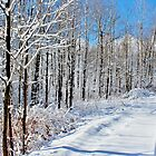 A View of Winter from the Lane by Kathleen Daley