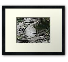 Quill Framed Print