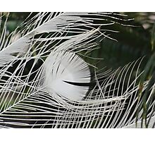 Quill Photographic Print