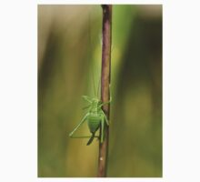 Speckled Bush Cricket Kids Tee