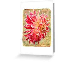Frilly and Fabulous Greeting Card