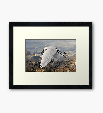 Beach Beauty - Great Egret Framed Print