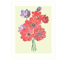 A Posy Of Wild Red And Lilac Anemone Coronaria Isolated  Art Print
