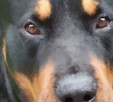 Beautiful  Female Rottweiler Portrait Vector by taiche