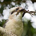 A Kooka Catch by byronbackyard