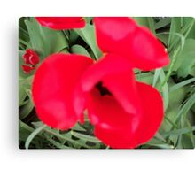 A Poppy Canvas Print