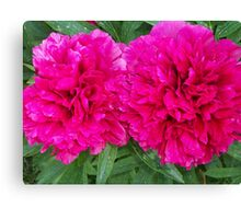 Grandmothers Peonies: The Couple Canvas Print