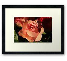 Pink Rose in Bloom Framed Print