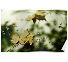 Leaves and Drops Poster