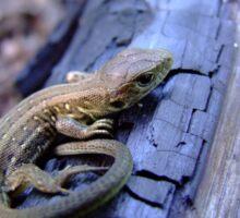 Lizard on charred wood Sticker
