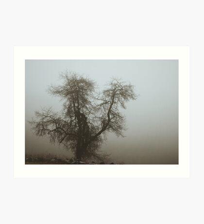 Fog and Branch Art Print